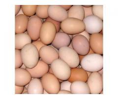 farm fresh table eggs brown/white