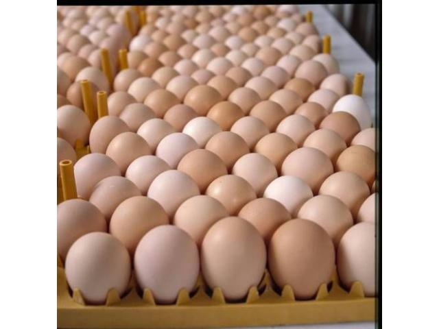 farm fresh table eggs brown/white - 3/3