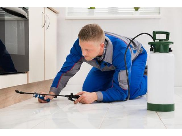 Fumigation and Pest Control Services in Gauteng - 1/2