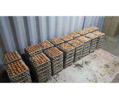Eggs in bulk for sale   Eggs for sale