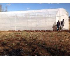 Affordable Greenhouse Tunnel For Sale