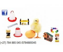 Chickens and eggs available at good prices