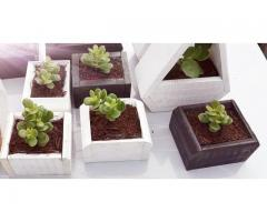 Garden plant boxes with free plant!!!