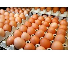Grade A Fresh farm eggs for sale