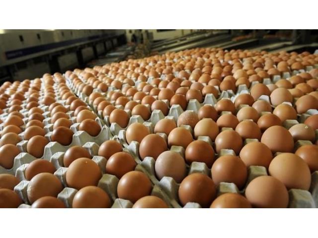 Wheelie Bin Cleaning >> Grade A Fresh farm eggs for sale | Class Ads