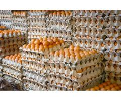 Premium fresh farm eggs for sale