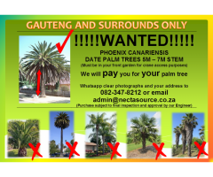 We will pay you for your palm tree