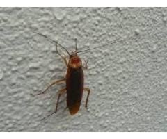 Bugs n Roaches Fumigators