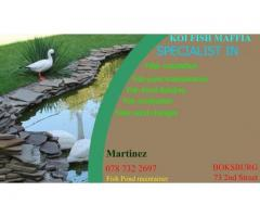 Fish pond maintainance
