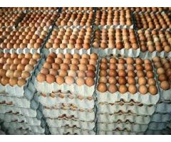 TABLE EGG White and Brown Eggs