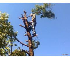 Eagles Nest Tree Felling