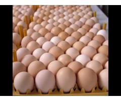 Quality fresh farm eggs for sale